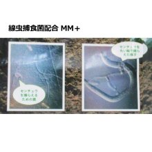 詳細写真2: センチュウ捕食菌配合ケイ酸資材|MM+ エムエムプラス【5kg】