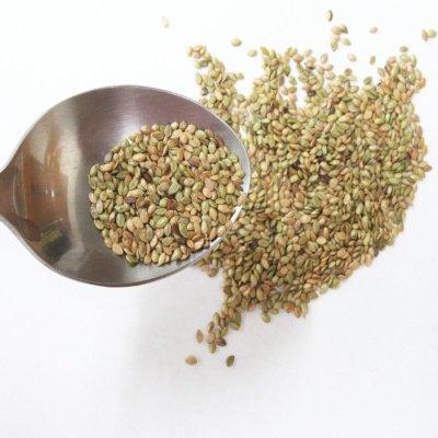 画像4: 【牧草種子】バヒアグラス【100g/25平方m分】暖地型牧草|緑肥 【送料無料】【時間指定不可】