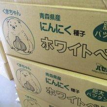 詳細写真2: 《くまちゃんブランド》種ニンニク「福地ホワイト6片」【2Lサイズ・1kg入り】【食用可】