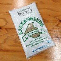 [品薄]【牧草種子】ペレニアルライグラス|ヤツカゼ2|4倍体中早生種|【1kg/200〜300平方m分】カネコ種苗製