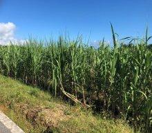 詳細写真3: 有機液体肥料-サトウキビのちから水100(N1-P0-K5)【1L】
