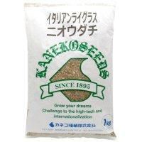 【牧草種子】イタリアンライグラス|ニオウダチ|早生種【1kg】カネコ種苗製