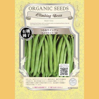 【有機種子】つるありインゲン  /丸さやタイプ / 緑 【大袋5dl】Climbing Bean : Round / Green
