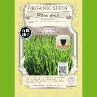☘️【有機種子】☘️ウィートグラス/小麦/スムージー&ジュース用【大袋400g】Wheat Grass : For smoothie and juice