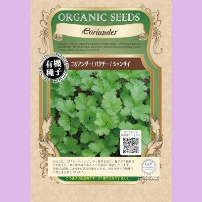【有機種子】コリアンダー/ パクチー / シャンサイ【大袋1dl】 Coriandrum sativum