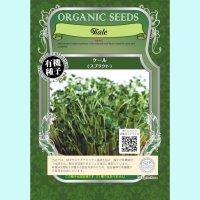 【有機種子】ケール/スプラウト【大袋330g】 Kale Sprout