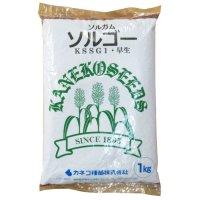 【飼料作物】ソルゴー【1kg】早生種|カネコ種苗製