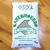 【牧草種子】トールフェスク|ウシブエ【中生種】【1kg】カネコ種苗製