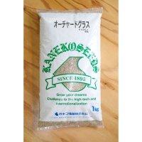 【牧草種子】オーチャードグラス【1kg】嗜好性の高い人気の多年生牧草|カネコ種苗製