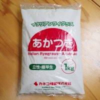 【牧草種子】イタリアンライグラス|あかつき【1kg】極早生種|短期利用型飼料作物用|PVP登録品種|カネコ種苗製