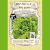 【有機種子・固定種】リーフレタス / ブラックシーデッドシンプソン / 緑【大袋0.5dl】Lactuca sativa