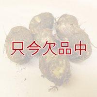 [完売][次回は2022年1月より予約開始します]【種芋】タネ里芋(サトイモ)「土垂れ(どだれ)」【500g】子芋食用種|ぬめり多く食感の良い人気の里芋