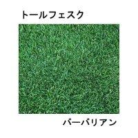 [新発売]【西洋芝・緑化】トールフェスク バーバリアン【22.5kg】カネコ種苗