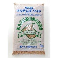 【緑肥用種子】オオムギ マルチムギワイド|シンジュボシ【1kg】リビングマルチ用 六条大麦|PVP登録品種|カネコ種苗製