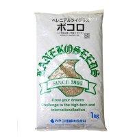 【牧草種子】ペレニアルライグラス|ポコロ|4倍体晩生種【1kg】PVP登録品種|カネコ種苗製