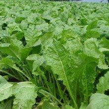 詳細写真2: 「速効性の葉肥」窒素46%粒状尿素【1kg】