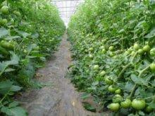 詳細写真3: 葉面散布剤 -バイオ・ガード-【1L】自然環境農法オリジナル