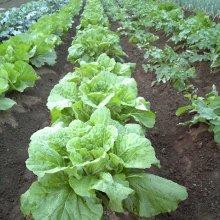 詳細写真1: セル苗・播種用「種まき培土」【40L】(家庭菜園、プロ農家用)
