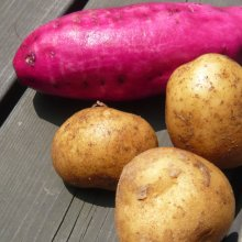詳細写真1: 「速効性の根肥」硫酸加里50(硫酸カリウム)【800g】「水溶性加里50%・根菜、芋類、球根に最適」