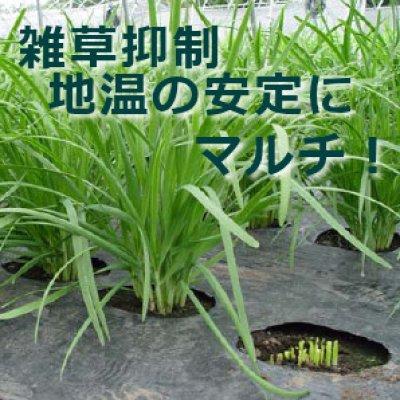 画像5: フリーホール防虫シルバーマルチ(厚0.02mm×幅95cm×長50m)いろいろな野菜が同時に植えられます