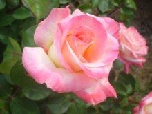 詳細写真2: ベリーニームV 野菜・花卉用500ml|アザディラクチン10000ppm配合