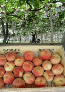 詳細写真2: 葉面散布剤 -バイオ・ガード-【1L】自然環境農法オリジナル