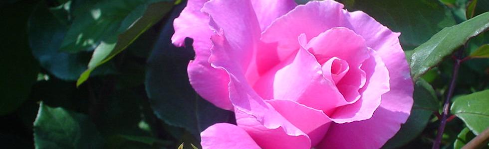 バットグアノで花色を楽しむ。