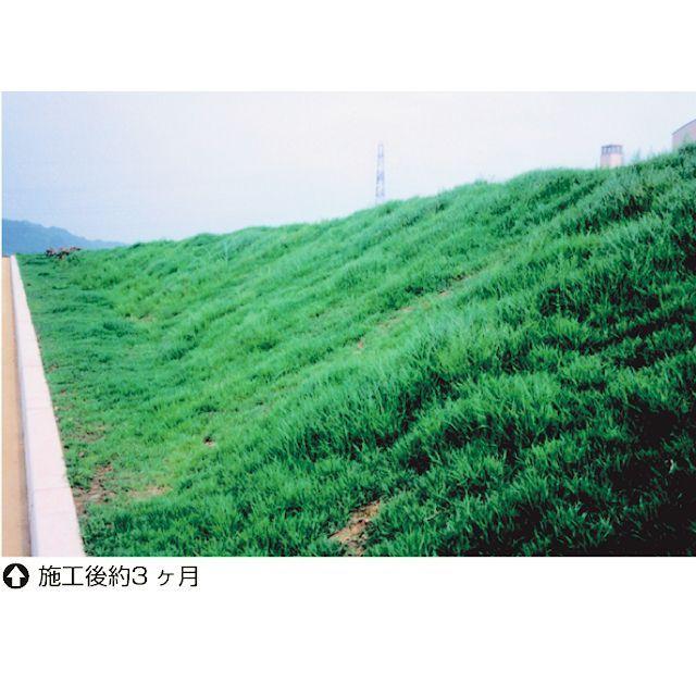 【暖地型芝草】野芝|ノシバ K・S・T・2|発芽促進処理済種子 ...
