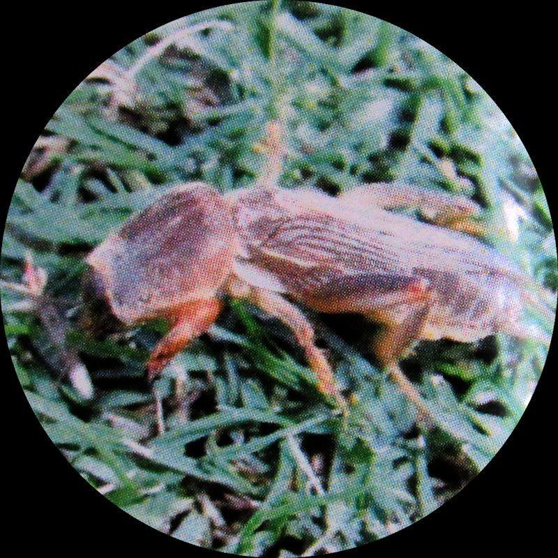 害虫 芝生 芝生の害虫にはどんなのがいる?駆除方法は?| Pacoma